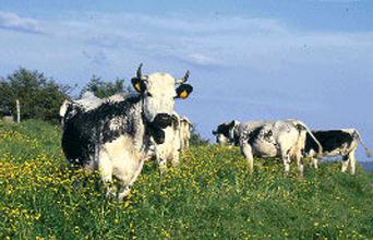 Panneau de ferme standard