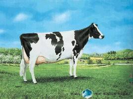 Panneau Prim Holstein
